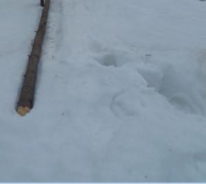 жерди под снегом