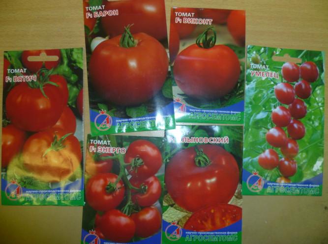 семена томатов для кировской области