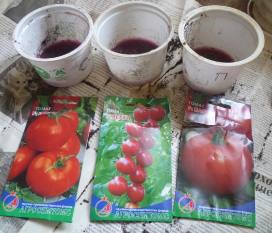замачиваю семена томатов