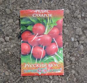 редис сорт сахарок