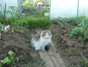 кот в теплице