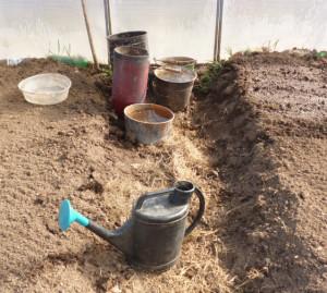 посев семян капусты в теплице