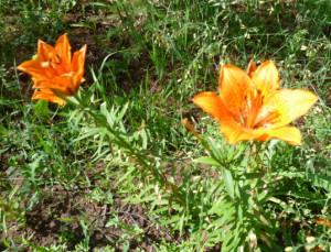 cvety-4