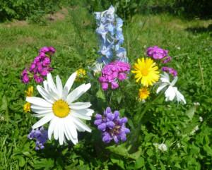цветы на усадьбе