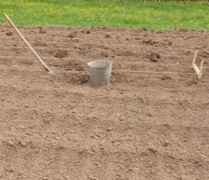 посадка картофеля на поле