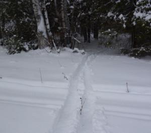 опушка леса зимой