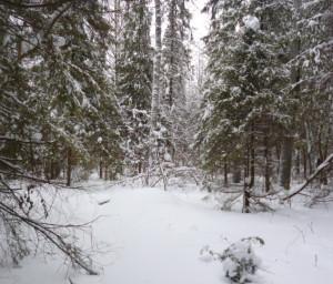 поляна в лесу