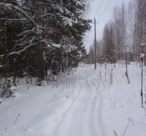 след от снегохода в лесу
