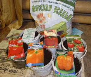 семена перцев 2015