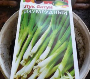 семена лук батун